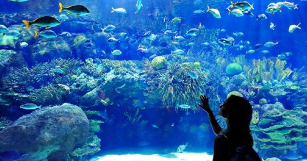 World Aquarium St Louis Missouri Aquariums Pinterest