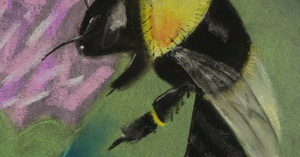 Bees kid and chalk pastels on pinterest