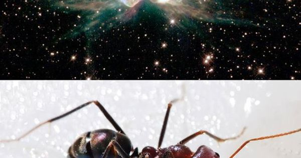The Ant Nebula was named due to its resemblance to a real ...
