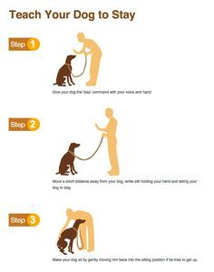 Teach Your Dog To Stay Dog Training Dog Training Tips Puppy