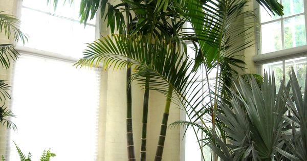 palm bamboo, palm chamaedorea seifrizii, palm diagram, palm beetle, palm trees, palm seeds, palm bonsai, palm pattern, palm flowers, palm shoot, palm rats, palm vector, palm roses, palm border, palm christmas, palm leaf chickee, palm drawing, palm tr, palm leaf cut out, palm shrubs, on palm houseplants names