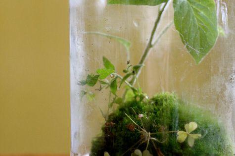 pour votre jardin int rieur un terrarium dans un bocal en verre jardin int rieur terrarium. Black Bedroom Furniture Sets. Home Design Ideas