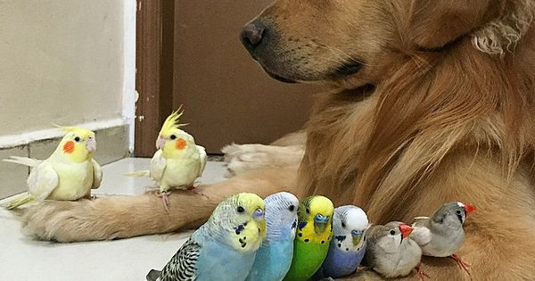 A Dog, 8 Birds and a Hamster Are the Most Unusual Best