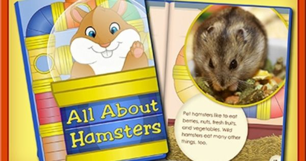 Read The Book All About Hamsters One Of The Most Popular