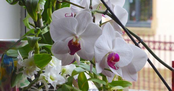 Fiche Conseil Comment Faire Refleurir Une Orchid E Art Floral And Horticulture