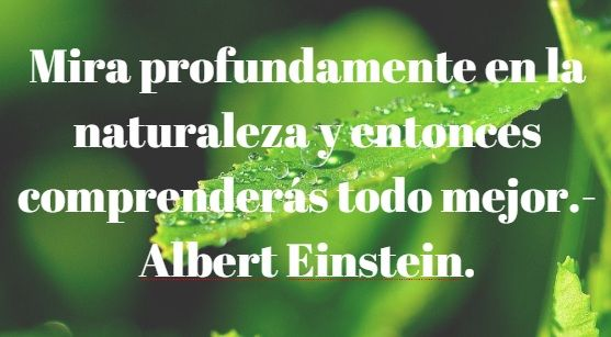 Frases Ambientalistas O Ecológicas Para Reflexionar Y Concienciar Sobre El Medio Ambiente Y Sus Pro Frases Ambientales Frases Naturaleza Afirmaciones Positivas