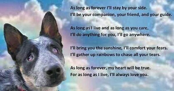 I Ll Always Love You Cattle Dogs Rule Blue Heeler