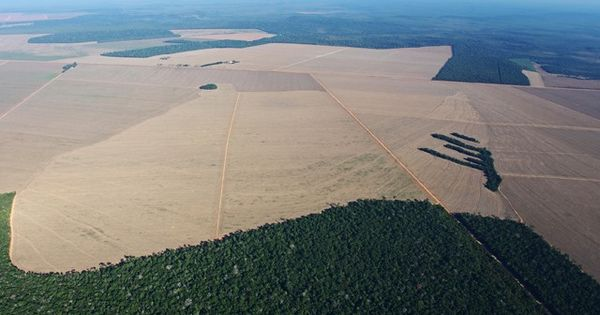 increased deforestation brings irreversible damage to the earth Sustainable design, solution for global warming  and the continuation of deforestation despite worldwide pleas to stop it  brings nothing but damage.