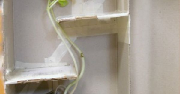 Elementary Classroom Ideas ~ Home science experiments maze the plant and awesome