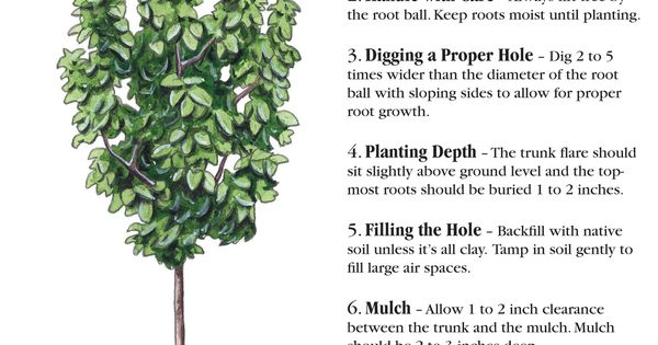 6 Things You Should Know When Planting A Tree | Gardening ...