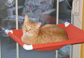 Pvc Cat Window Perch Petdiys Com Diy Cat Hammock Cat