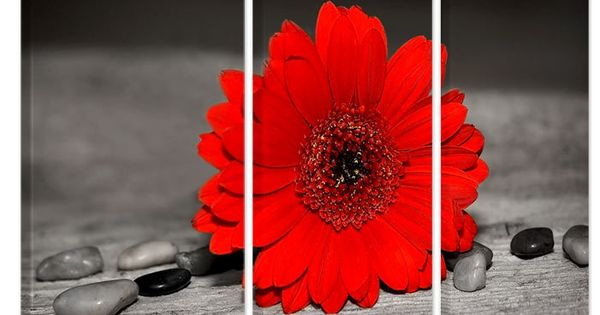 Zwart wit foto schilderij met rood kleuraccent van een bloem deze wanddecoratie is verkrijgbaar - Schilderij romantische kamer ...