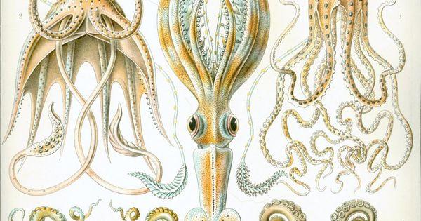 Squid and Octopus print Nautical print beach house decor wall art wall