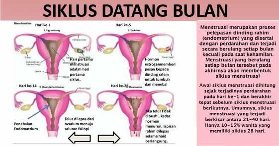 48+ Menstruasi tapi positif hamil ideas in 2021