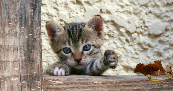 Milk Plz Kittens Cutest Cute Kitten Gif Cute Cats