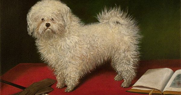 Maltese On A Table William Secord Gallery Canine Art Dog Paintings Dog Art