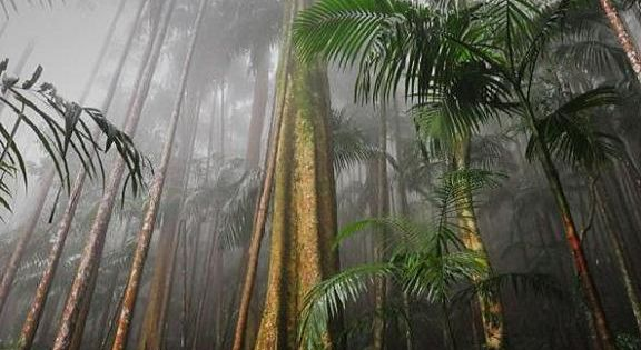 Mount Tambourine rain forest SE Queensland Australia