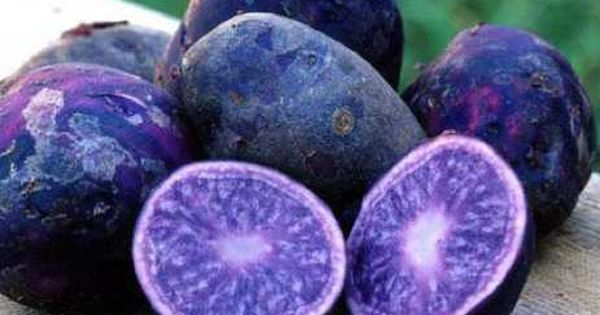 Purple Majesty Potato This variety of potato is a true sight of