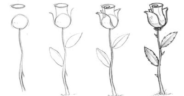 Drawing For Beginners Step By Step Pdf Google Search Flower Drawing Roses Drawing Drawings