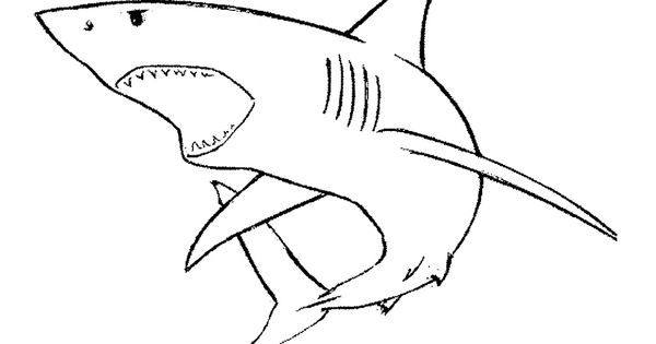 Gallery For > Shark Mouth Open Drawing | Image File ...
