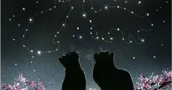 I love love love this! Black Cats looking up at Cat Constellations