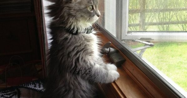 And this curious peeper. | 39 Overly Adorable Kittens To Brighten Your