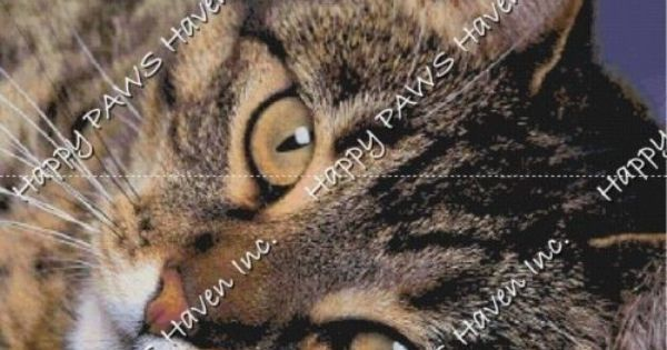 Brown Tabby Closeup Cat Cross Stitch Pattern Chart Cat Cross Stitch Pattern Cross Stitch Patterns Cat Cross Stitch
