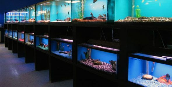 Fish Breeds Information And Pictures Of Saltwater And Fresh Fish Breeding Fishing Room Fish