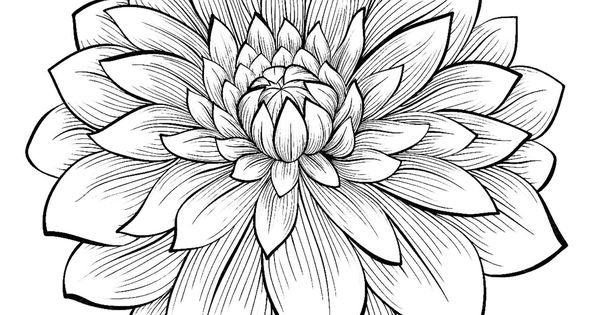 1 Dahlias to print amp color From