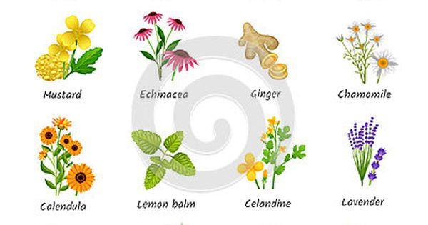Medicinales Medicinal Plants Plants Healing Plants