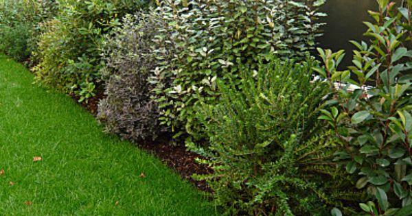 plantes pour haie vive jardin pinterest plante pour haie haies et plantes. Black Bedroom Furniture Sets. Home Design Ideas