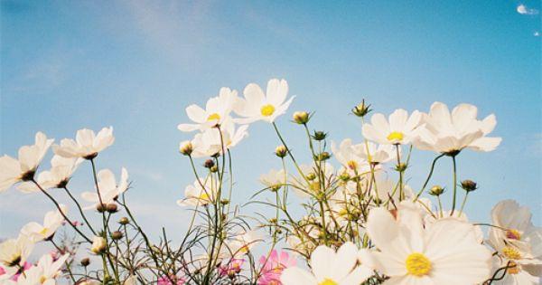 اللهم إني أعوذ بك من قهر يؤلمني ومن فكر يقلقني اللھم يا مالك الكون اكفني شر ما يكون قبل أن يكون Nature Flowers Wild Flowers