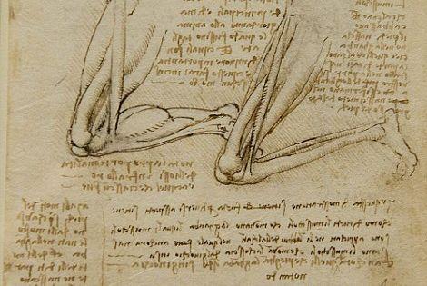 Dibujos Anatomicos De Leonardo Da Vinci Anatomia Artistica Leonardo Da Vinci Dibujo Anatomico