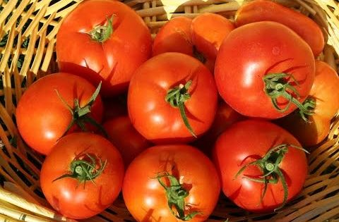 Jet Star Tomatoes Follow Our Jet Star Tomatoes Through The Summer Tomato Edible Vegetables