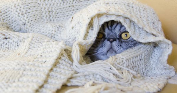 {Papoose Smoosh} so cozy! This cat kinda looks like a Sith Lord