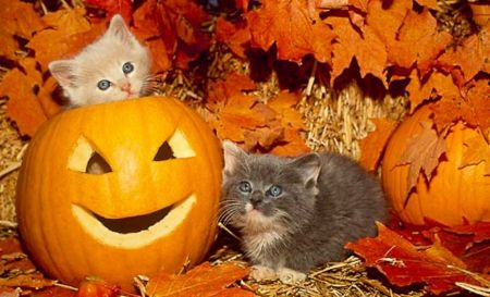 Two Kittens And Halloween Pumpkins Desktop Nexus Wallpapers Kitten Wallpaper Cat Wallpaper Cats And Kittens