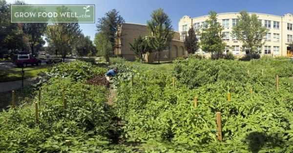 Tom In The 4000 Square Foot Downtown Garden Starting A Vegetable Garden Growing Food Garden
