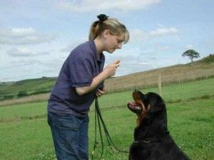 How To Train A Therapy Dog 6 Methods Commonly Used By