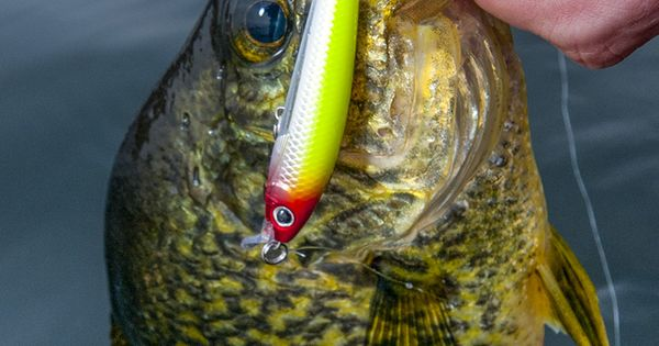 4 tips for hard lure crappie in the fall wired2fish for Wired 2 fish