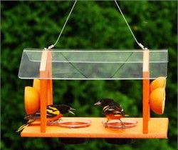 Homemade Oriole Bird Food That You Can Make Bird Feeders Oriole Bird Wild Bird Feeders