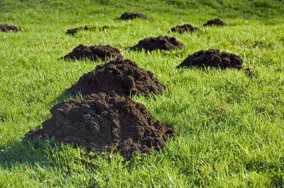 Pin Auf Rasenpflege