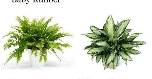 Houseplants that clean indoor air  Interior design - Garden/balcony/indoor plants ...