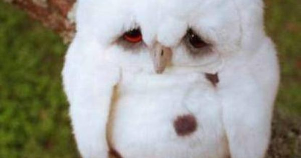 What a cute baby owl poor owl! if they r mean to