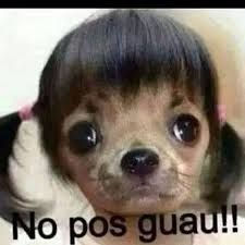 Imagen Relacionada Mexican Funny Memes Funny Animal Jokes Funny Spanish Memes