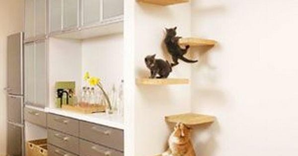katzentreppe in der 684 1052 katzen pinterest cat and kitty. Black Bedroom Furniture Sets. Home Design Ideas