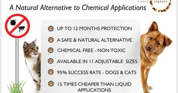 Natural Tick Flea Pet Collars Flea Collar Essential Oils For Fleas Coconut Oil For Dogs