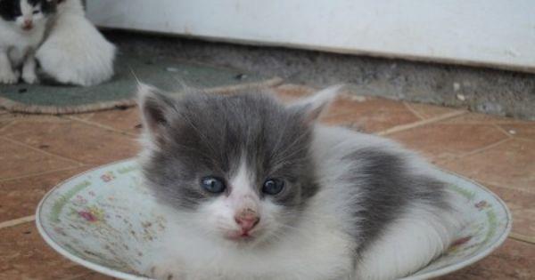 Weaning Kittens From Their Mother Kitten Care Kittens Cats Kittens