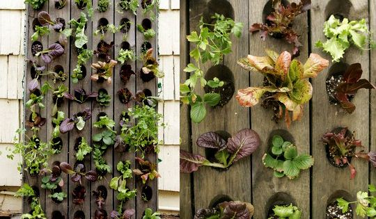 Vertical Salad Garden by Anne Phillips via apartmenttherapy Vertical_Garden Anne_Phillips apartmenttherapy