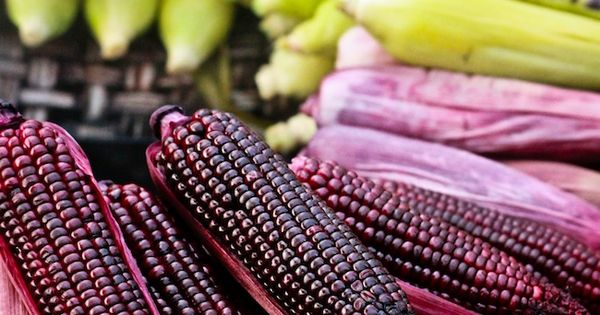 Colorful Corn healthy food healthy eating healthy eating images healthy eating photos
