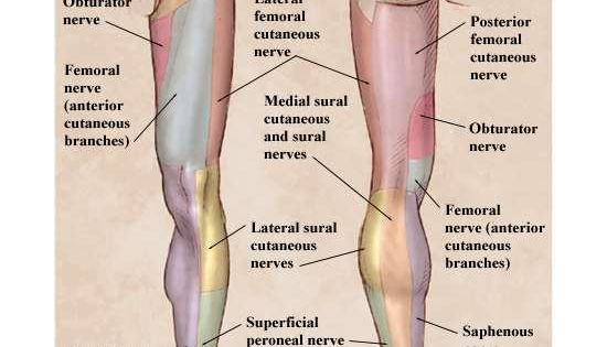 leg parathesis Common migraine symptom complaints are feeling of numbness or tingling in a small or large area of the body like the arm or leg.